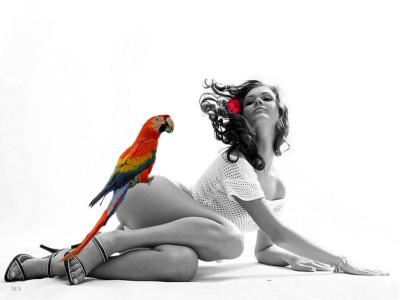 Tapeta: dívka a papoušek