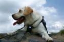 Tapeta Dog-packing - odpočinek