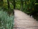 Tapeta Dřevěná cesta