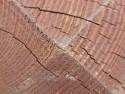 Tapeta Dřevěný hranol