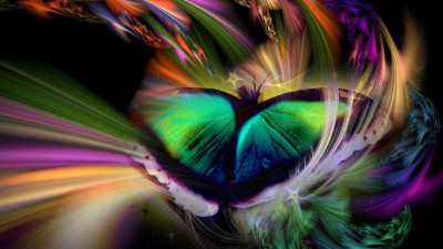 Tapeta: duhový motýl