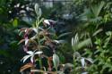Tapeta Exotická květina