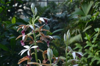 Tapeta: Exotická květina