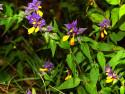 Tapeta fialová květina