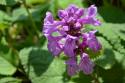 Tapeta Fialový květ