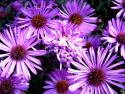 Tapeta flower12
