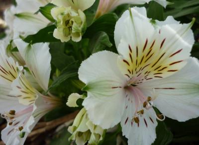Tapeta: Flowers 006