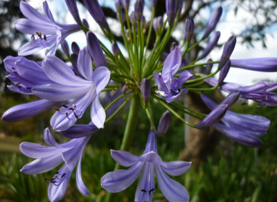 Tapeta: Flowers007