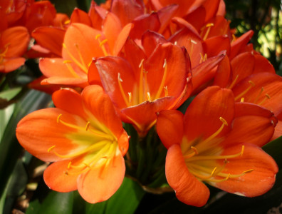 Tapeta: Flowers 008