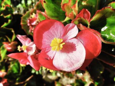 Tapeta: flowers11