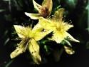 Tapeta flowers12