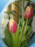 Tapeta Flowers II.