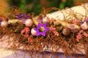 Tapeta foceno na floris.výstavě2