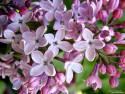 Tapeta Fotografie květin 10
