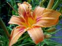 Tapeta Fotografie květin 14