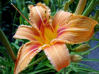 Tapeta: Fotografie květin 14