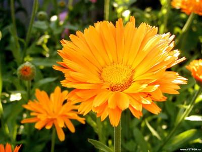 Tapeta: Fotografie květin 19