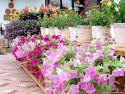 Tapeta Fotografie květin 2