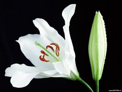 Tapeta: Fotografie květin 22
