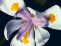Tapeta Fotografie květin 23