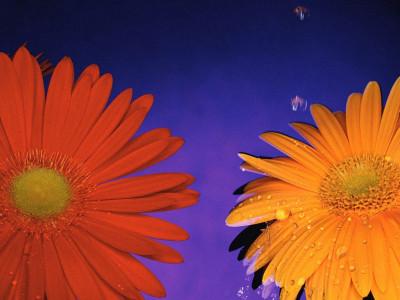Tapeta: Fotografie květin 24