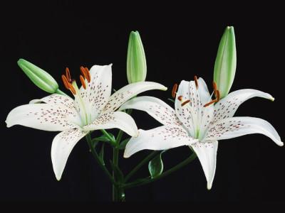 Tapeta: Fotografie květin 26