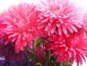 Tapeta Fotografie květin 29