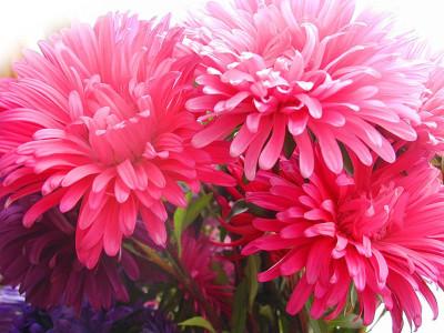 Tapeta: Fotografie květin 29