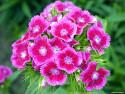Tapeta Fotografie květin 3