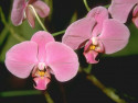 Tapeta Fotografie květin 30