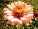 Tapeta Fotografie květin 33