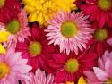 Tapeta Fotografie květin 35