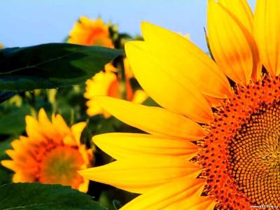 Tapeta: Fotografie květin 39