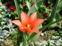 Tapeta Fotografie květin 4