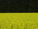Tapeta Fotografie květin 5