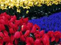 Tapeta Fotografie květin 6