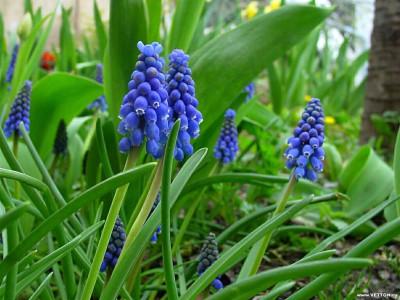 Tapeta: Fotografie květin 9