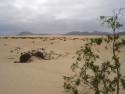 Tapeta Fuerteventura 3