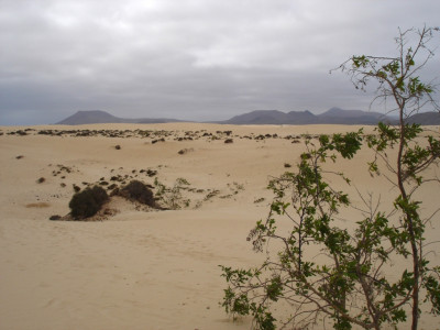 Tapeta: Fuerteventura 3