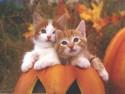 Tapeta Halloween a Kočky
