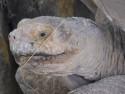 Tapeta Hlava želvy