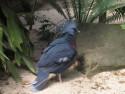 Tapeta Holub Zoo
