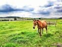 Tapeta horse01