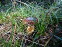 Tapeta Houba v trávě