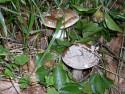 Tapeta houbičky