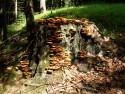 Tapeta houbový pařez