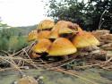 Tapeta houby na pařezu