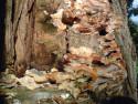 Tapeta Houby na třešni