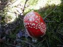 Tapeta Houby a houbičky 14