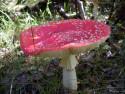 Tapeta Houby a houbičky 15